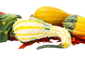 Gourds for fall decoration