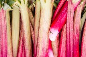 Rhubarb stalks at the market