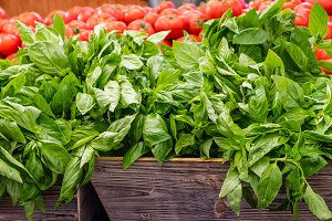 Fresh basil herb at the market