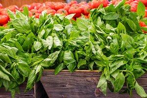 Fresh basil herb at the market