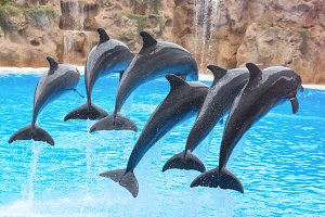Dolphins jumping in the water