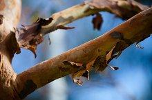 Wood textures nature 5 image set