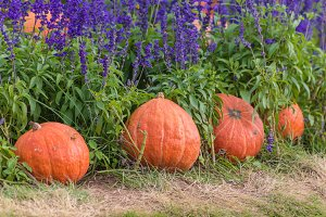 pumpkin on green grass