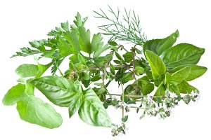 Green fresh herbs  isolated