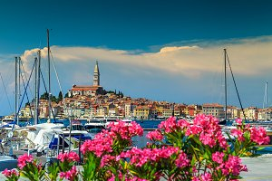 Beautiful cityscape with flowers