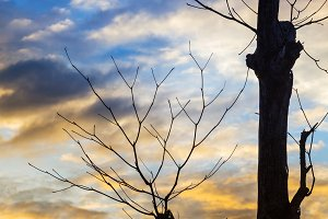 Silhouette tree twig