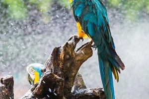 Macaw parrot in garden