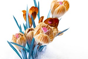 spring color crocus flower bouquet