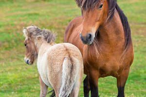Brown Horse and Her Foal