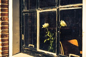 Roses in a Dirty Window