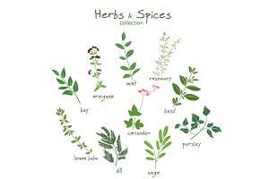 Herbs and spices vector collection