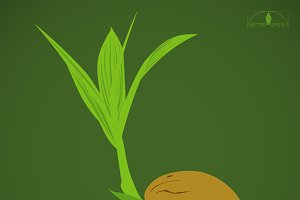 Coconut sprout illustration