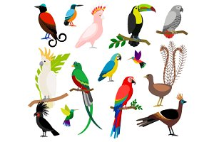 Exotic tropical birds