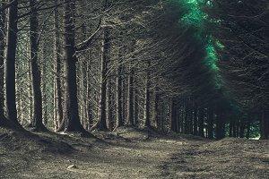 Road through dark forest