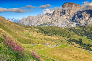 Alpine flowers in mountains