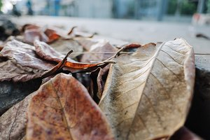 Close up of leaves dried on roadside