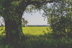 Open spot in hedge
