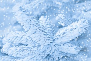 Snow frost on Christmas tree
