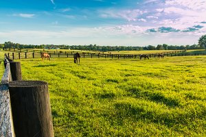 Green pastures of horse farms