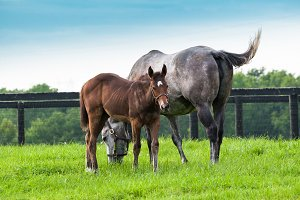 Horses, mare with her colt
