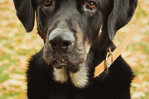 Black dog looking at camera