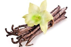vanilla sticks and orchid