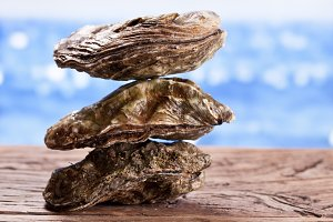 Raw oyster on wood.