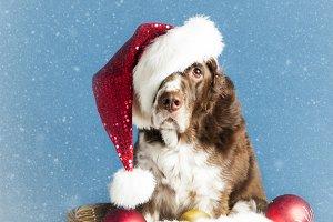 Snowy Santa Dog