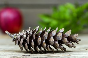 Old pine cone with an apple
