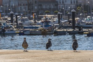 Seagulls on dock.