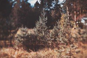 True tilt-shift small fir and houses
