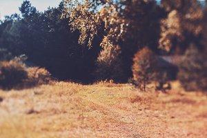 path through the meadow