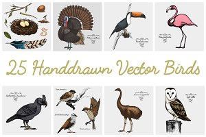25 handdrawn vector realistic birds