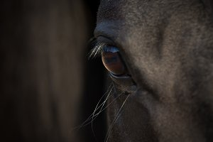 Horse eye close-up in darkness.