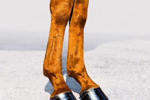 Horse legs with hooves close-up