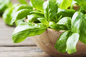 Fresh green basil