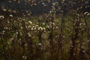 Autumn Wildflower Background