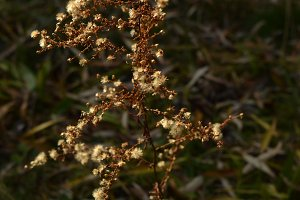 Jewel-like Autumn Wildflowes