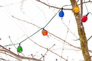 Light garland on bare tree