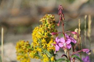 Wildflower 2 // CO
