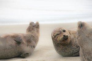 Winking Seal // CA