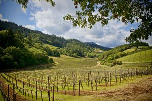 Wine country, Napa Valley