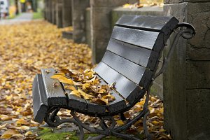 Wet Autumn bench