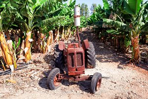 An old abandoned rustic tractor on a banana plantation