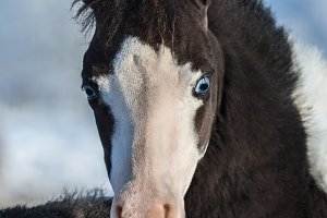 Foal with blue eyes.