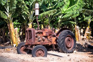 An abandoned old tractor on a banana plantation