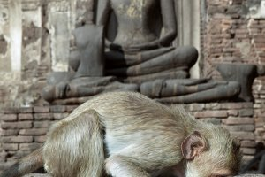 Buddha and monkey