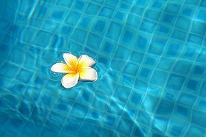 Tropical flower in pool