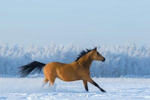 Horse running across snowy field