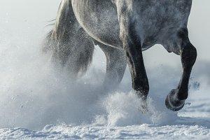 Legs of horse close up.